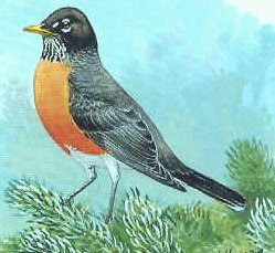 Image result for first robin of spring