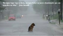 """""""En algún lugar bajo la lluvia, siempre habrá un perro abandonado que me impedirá ser feliz."""""""