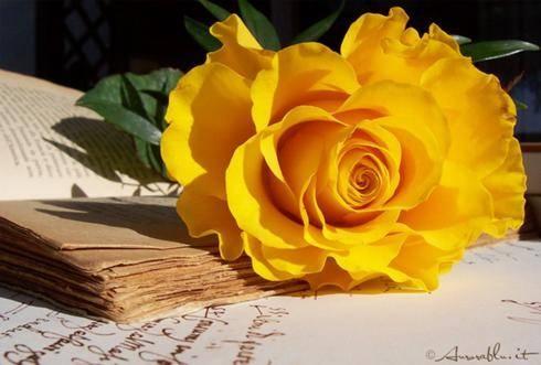 58. Gönülçelen -Inima furata - Heart Stealer - General Discussions - Comentarii - Pagina 3 Trandafir+galben