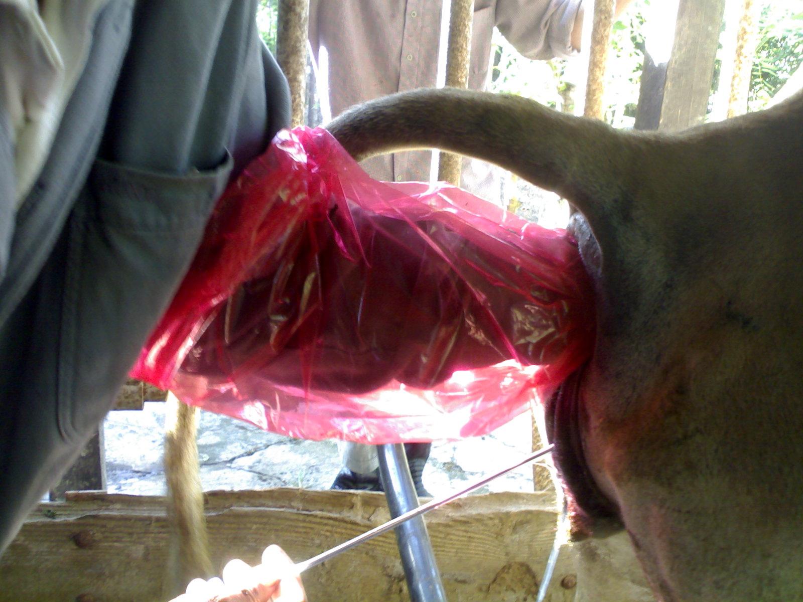 kumpulan pakan ternak entok