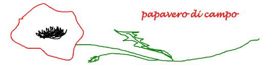 papavero di campo