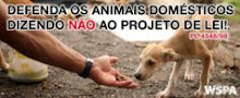 PROTEGENDO NOSSOS IRMÃOS, OS ANIMAIS!