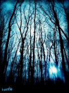 Der Dunkel Wald by doommetal club
