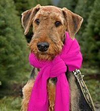 AIREDALE LOVE