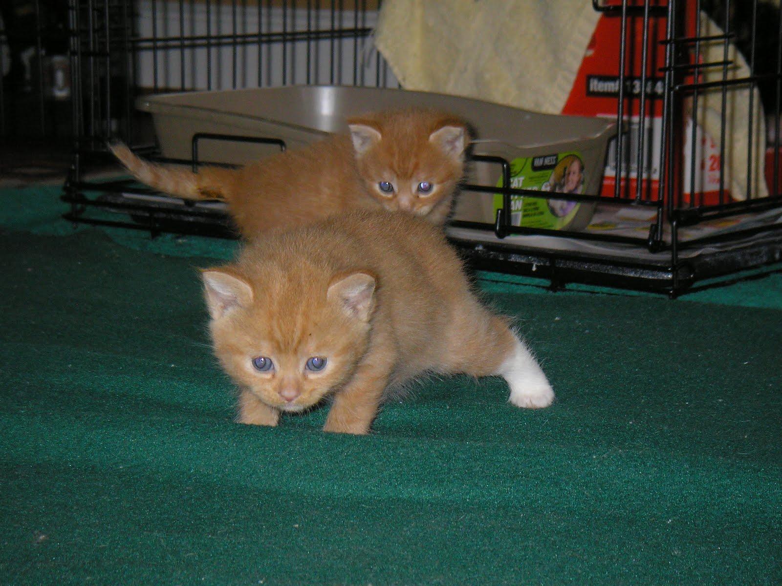The Kitten House Inc