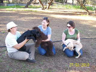 A picture of Tracy, Beth and I all with our puppies in our laps, Celia and Alfie are trying to get at each other and Bob isn't looking at either of them.. He looks preoccupied with something outside of the shot.