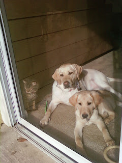 Qena, Egypt and Bob laying in front of the patio door waiting for us to get back.