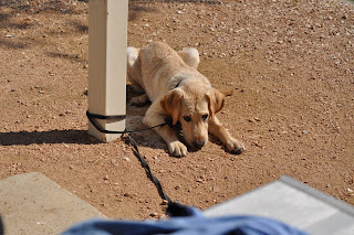 Bob laying on some gravel with his leash wrapped around a pole, it wrapped about 3 times