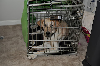 Bob in his crate with his feet sticking out of the front of it