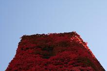la photo du 3 octobre 2008 (144)