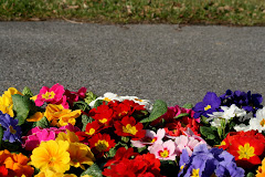 la photo du 6 mars 2009 (296)