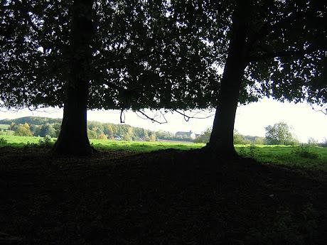 la photo du 30 octobre 2010 (884)