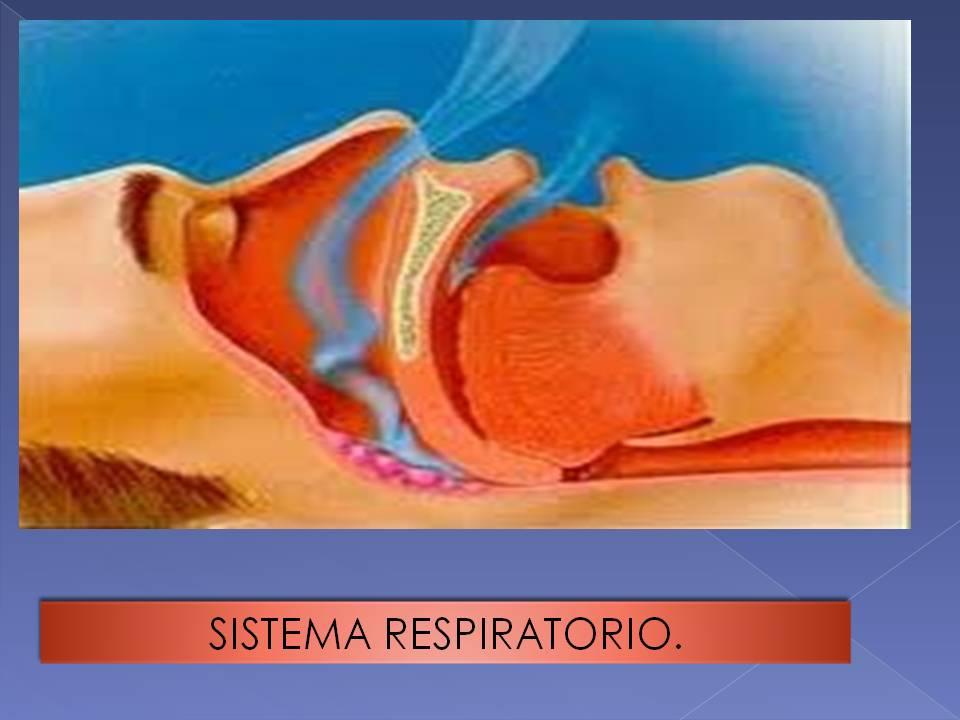 Anatomía y Fisiología humana: APARATO RESPIRATORIO.
