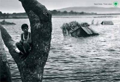 Save our forest. Prevent floods and save lives