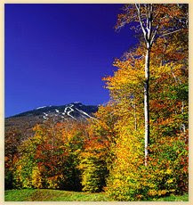 Vermont Changing Leaves