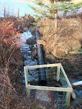 Muskrat Pond Beaver Deceiver