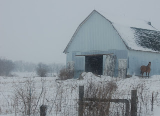 Barns With Horses In Snow