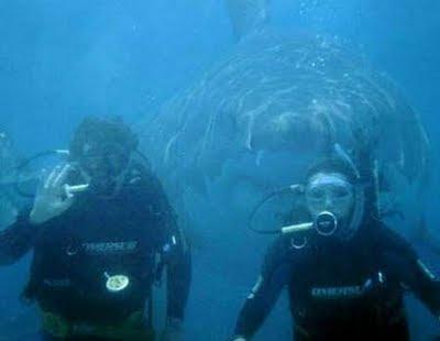 tiburon Los 10 mejores montajes fotográficos