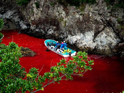 marojo Comienza la temporada de caza de delfines