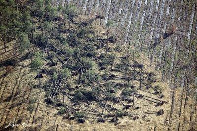 Phot aérienne d'un parcelle dévastée sur Cabanac et Villagrain avec arbres déracinés et enchevêtrés