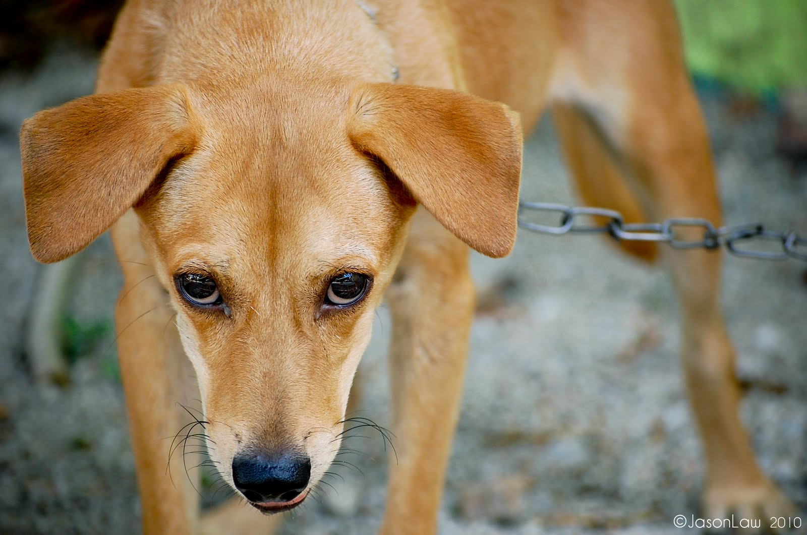 http://4.bp.blogspot.com/_4i5HngzV2GE/S6zQ8pE30SI/AAAAAAAAA_Y/F1C69XxaP1g/s1600/Dog+eye.jpg