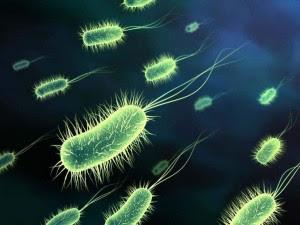 Flagelo bacteriano in situ: Darwin não explica a origem e nem a evolução disso!!!  Flagelo+bacteriano+7