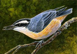 Red-breasted Nuthatch painting by Shari Erickson