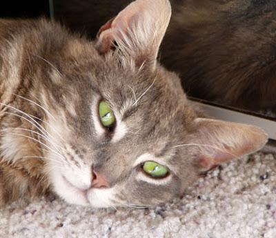 tabby cat marble