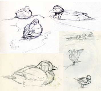 Sketches by Shari Erickson