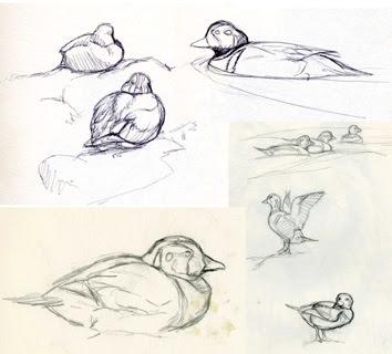 Sketches by Shari Erickson