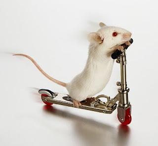 http://4.bp.blogspot.com/_4jrSe7N3JYI/TDAU8NjZO0I/AAAAAAAABBY/r5IOi-eRs44/s1600/white-mouse-on-skate-board.jpg