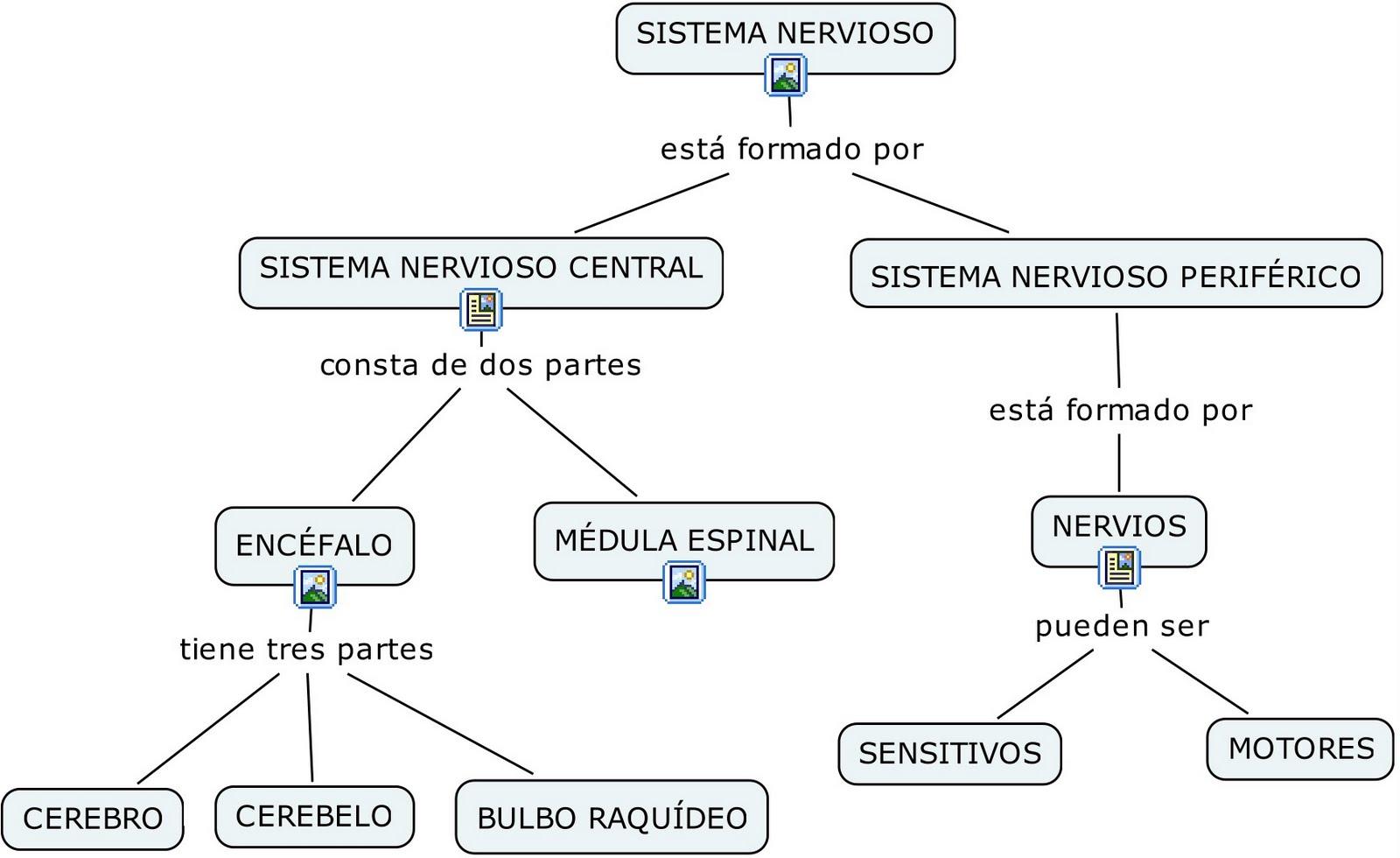 mapa conceptual sobre el sistema nervioso de los animales - Brainly.lat