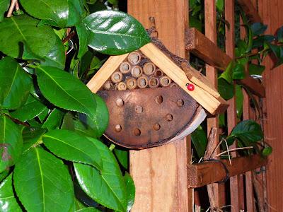 Garden Bug Box