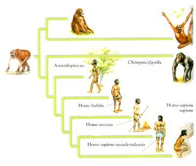 clasificacion de los animales. clasificacion de