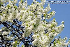 Frühling läßt sein Blaues Band wieder flattern durch die Lüfte...
