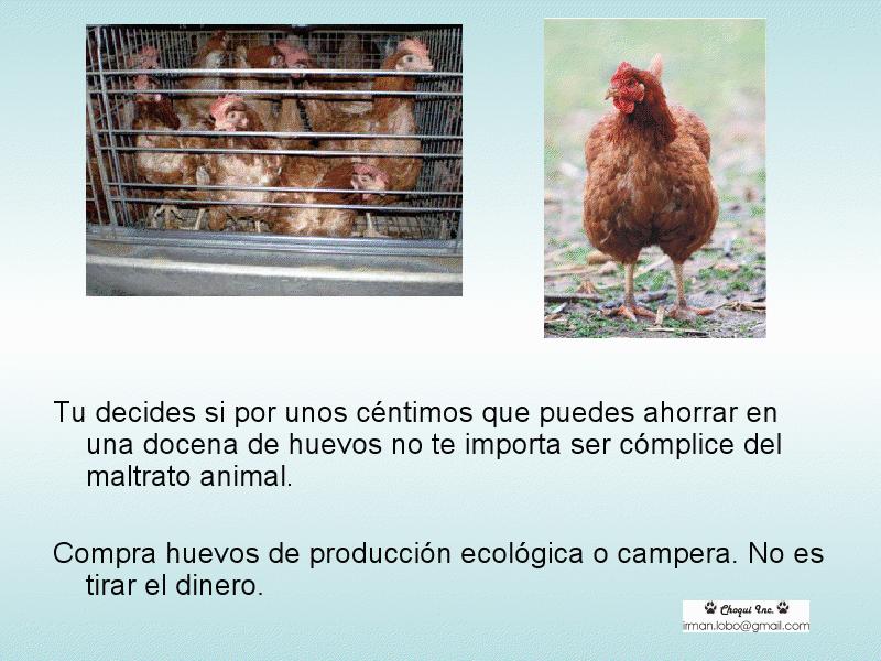 [Huevos+8.jpf]