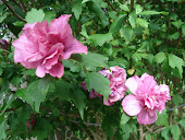 """Lucy"" Rose of Sharon"