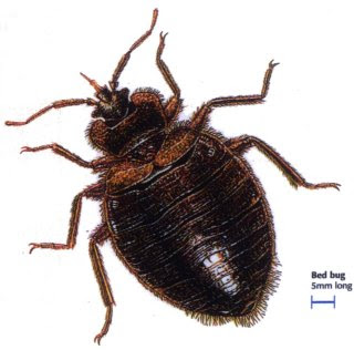 Get Rid Of Bed Bugs: Kill Bed Bugs