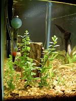 Ryby akwariowe - Zakładanie akwarium od początku