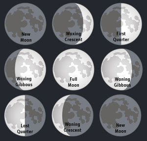 Quarter moon or a half moon  Moon Phases  EarthSky