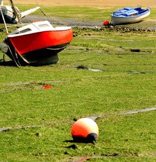 À Brest, la plage tapissée d'algues vertes