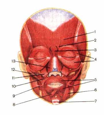 Расслабление мышц артикуляционного аппарата. Лечение дизартрии