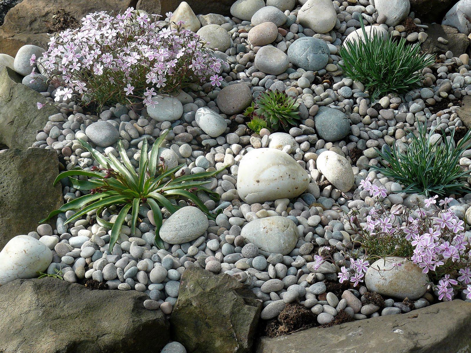 Nessie 39 s world unser kleiner steingarten for Steingarten bilder