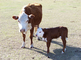 Hunter's new Calf