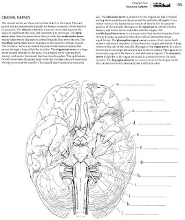 Kaplan Medical Coloring Book Anatomy : kaplan anatomy coloring book