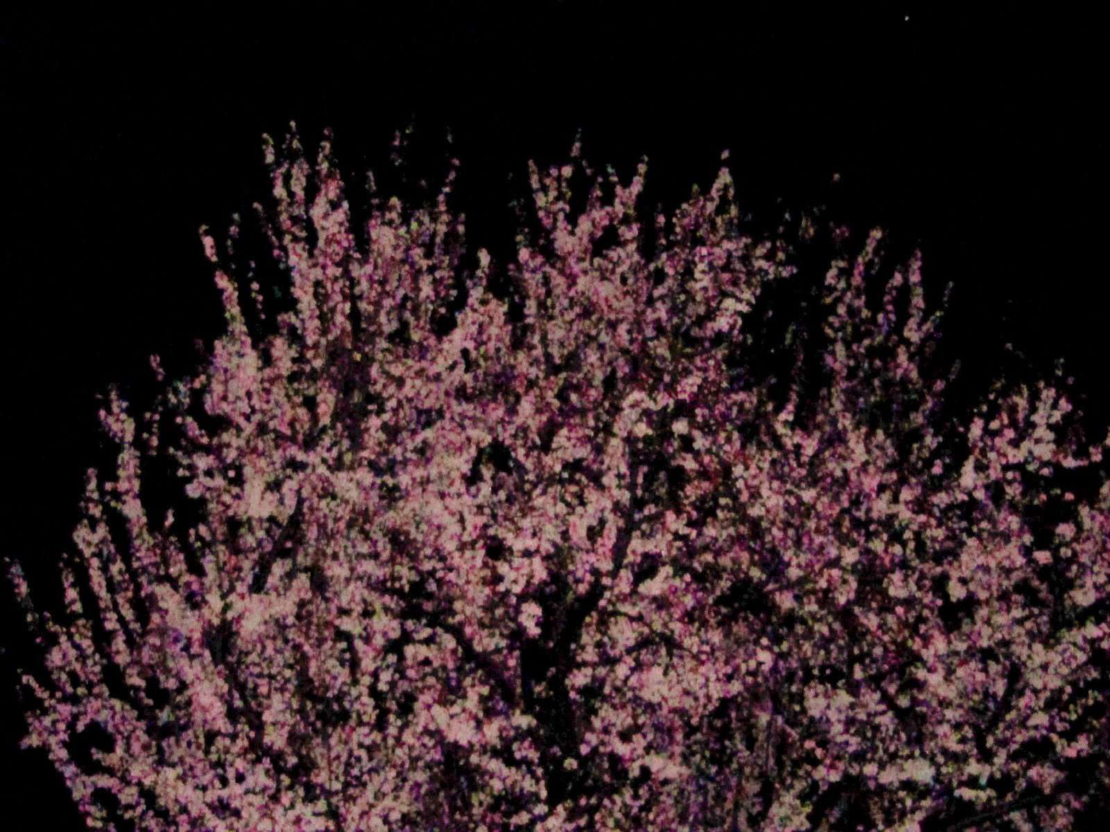 [photoshop-+pink+tree]