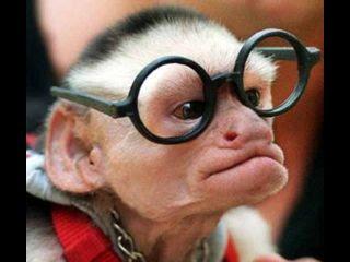 Monkey2520With2520Funny2520Glasses Larry2520King jpg thumb - Meri taraf sey aapkey liyye