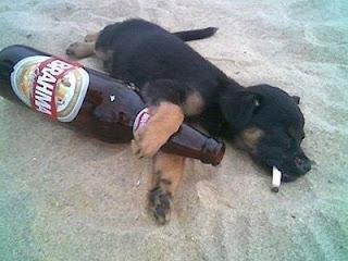 http://4.bp.blogspot.com/_4vSexq-6fj0/S6tFHz2PXtI/AAAAAAAAGFg/Kp1cRo-9aTA/s400/cachorro-bebado-na-praia.jpg