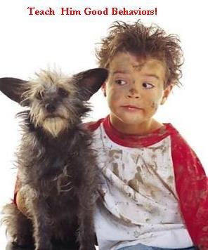 dog attacks dog bites dog attacks and dog bites dog aggression dogs attack prevent dog attacks dog bites and dog attacks dog behavior fatal dog attacks make a dog attack canine behaviorist Socialize your dog