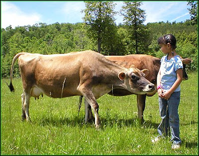 Love Animals love about cows more milk Love can win everything how much you love her cows treated with love cattle behaviorist call a cow by name consequences of stress in cows Discovery News